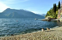 View to lake Como at Varenna and ducks. Stock Image