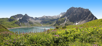 View to Lunersee and Brandner glacier, Austria. Panoramic view from above to lunersee and brandner glacier, alpine flowers in the front, beautiful landscape in Royalty Free Stock Photography