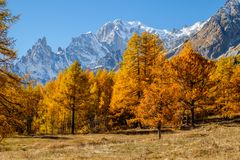 View to the mont blanc autumn. Italy Coumayeur Ferret valley. View to the mont blanc autumn. Italy montain Coumayeur Ferret valley royalty free stock images
