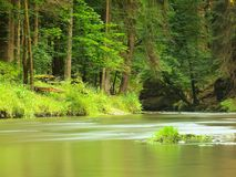 View to mountain stream below fresh green trees. Water level makes green reflections. The end of summer Stock Images
