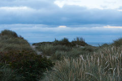 View to the Northsea from the dunes in Vorupor, Denmark. Dunes at the North sea coast in Denmark stock images