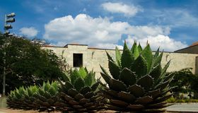 View to Oaxaca cathedral square with agave plant, Mexico stock photo