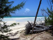View to the ocean on Grand Bahama Island Stock Photography
