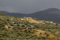 View to Olive Trees in Druze village Peki'in , Israel. Stock Photos