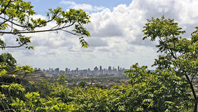 A view to Recife. Recife, Pernambuco, Brazil, 2009. A view to Recife through the trees from the hills of Olinda Stock Photo