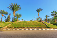 The view to road and palm trees near the hotels Stock Photography