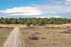 View to a sand dune along a bicycle way in a beautiful heathland. View to a sand dune in the beautiful natural reserve ´de hoge veluwe´ in the netherlands Royalty Free Stock Photos