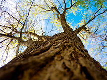 View to sky. Different view, along up the tree, find this beautiful sky Stock Photos