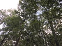 View to the sky from the forest, watching the treetops. stock photos
