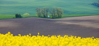 View to small chapel in fields through rapeseed flowers Royalty Free Stock Images