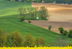View to small chapel in fields through rapeseed flowers Royalty Free Stock Photo
