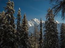 View to the snow-covered Piz Lischana mountain group through the Royalty Free Stock Photography