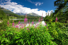 View to Strbske pleso in High Tatras during summer, Slovakia, Eu Stock Image