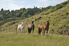 Three different color horses standing near fence. View to a three different color horses in a rural environment Stock Photography