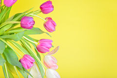 View to the tulips over yellow paper Stock Photo