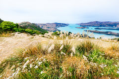 View to turquoise mountain lake from a grassy hill in New Zealan Stock Photos