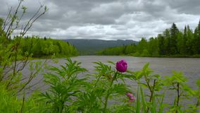 View to ural mountains. Peony stock footage
