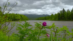 View to ural mountains. Trought flower stock video