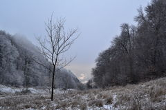 View to a valley between trees in winter Royalty Free Stock Images
