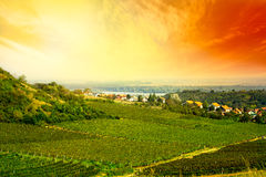 View to vineyard Royalty Free Stock Image