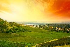 View to vineyard Royalty Free Stock Image