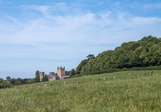 View to Wells Cathedral. View across farmland to Wells Cathedral Stock Image