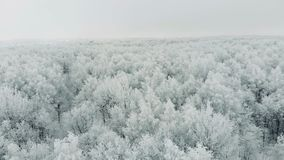 View from top. Aerial frozen pine and fir trees in the snow in winter.