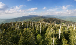 View from the top - great smoky mountains. Pine tree forest view from the highest point in the Great Smoky mountains Stock Photo