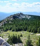 Landscape: mountains covered with pine trees Stock Image