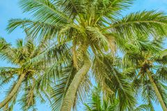 View of the top of the palm trees below stock images