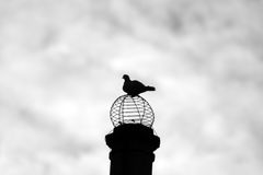 View from the top. A pigeon observing all below him Stock Image