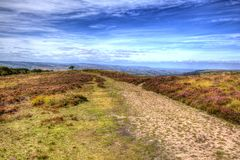 View on top of Quantock Hills Somerset England with purple heather in HDR Stock Photography