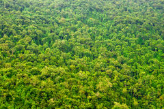 View from the top on the rain forest Royalty Free Stock Photography