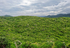 View from the top on the rain forest Royalty Free Stock Photos