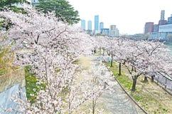 View on Top Sakura leaf Royalty Free Stock Photo