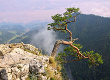 View from the top of Sokolica in Pieniny. Poland Stock Photos