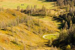 The view from the top on a Sunny day on the green hills and fiel. Ds. The Siberian forest. Winding mountain road Stock Photography