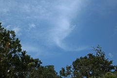 SOFT WHITE CLOUD AND BLUE SKY ABOVE TREES Royalty Free Stock Photography