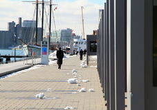 Toronto Harbourfront. A view of Toronto Harbourfront in a Winter day Stock Photo