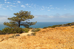 View at Torrey Pines Royalty Free Stock Photography