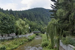 View toward river with bridge and varied plant Stock Image