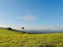 Lonely tree in Glass House Mountains stock image