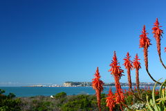 View towards Napier Port and Harbour with flowering aloes in the foreground. Hawkes Bay, New Zealand Royalty Free Stock Photography