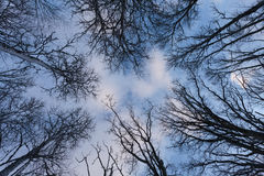 View towards the sky. Stock Images