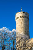 View of the tower Long Herman  in Tallinn Royalty Free Stock Images