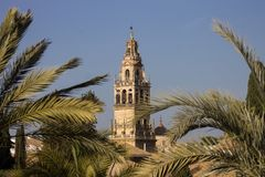 View of the tower of the mosque of Cordoba between palm trees royalty free stock image