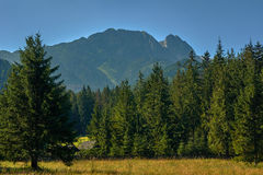View from the town of Zakopane the mountain Giewont Stock Photography