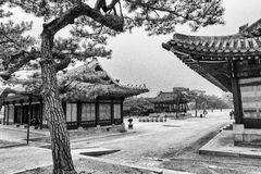 View of traditional buildings at Changgyeonggung Palace during cherry blossom in black and white royalty free stock images