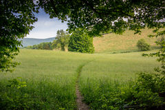 View of Trail in Open Field Royalty Free Stock Photos