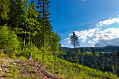 View from trail to the Pilsko Peak from Beskidy mountains Royalty Free Stock Images